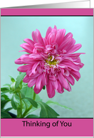 Thinking of You Greeting Card - Pink Dahlia card