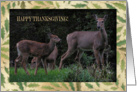 Deer Family, Happy Thanksgiving, Across the Miles card