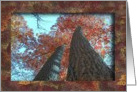 Tall Trees / At this Thanksgiving / In Remembrance card
