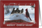 New Address, Merry Christmas, Cardinal Singing with the Sparrows card