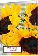 We have moved Change of Address with rustic sunflowers card