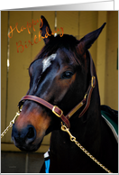 Happy Birthday - Horse Bling card