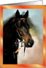 Horse Profile - Blank Card
