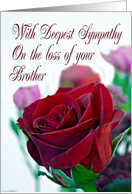 Sympathy on loss of Brother. Classic single red rose card