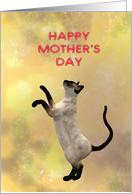 Siamese cat and Mother's Day card