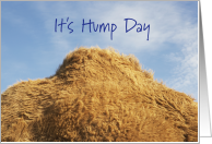 It's Hump Day With Camel's Hump card