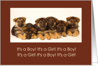 Cute Litter of Puppies Birthday Announcement card
