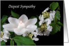 Deepest Sympathy/Suicide Victims Family/Friends card