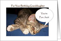 Granddaughter Birthday Card - Kitten card