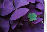Brazilian Shamrock Plus card