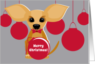 Merry Christmas Tan Chihuahua Dog with Red Ornaments on Silver Gray card
