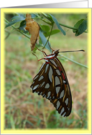 Lovely Butterfly Hello Friendship Card