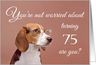 Happy 75th birthday, worried beagle card