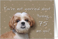 Happy 75th birthday, worried dog card