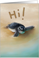 Hello Turtle card