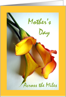 Mother's Day Across the Miles, Mango Colored Calla Lilies card
