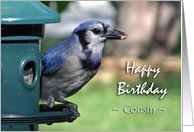 Birthday for Cousin, Blue Jay on Bird Feeder card