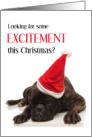 Save the Date, Christmas Party, Bored Dog card