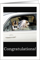 Congratulations Wedding Corgi Dog Couple Humor card