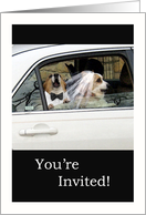 Wedding Vow Renewal Invitation Corgi Dog Couple card