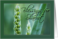 Blessings For Shavuot Wheat card
