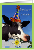 Portuguese Birthday Funny Cow card