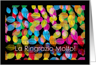 Ringrazio Molto, Thank You Very Much in Italian card