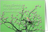 Birthday for Sister in Law, Flowering Tree and Robin card