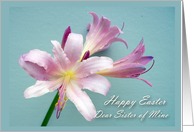 Easter Card for Sister, Resurrection Lily card