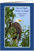 Congratulations for Nephew, Becoming an Eagle Scout, Eagle in Tree card