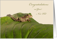 Congratulations on New Apartment, Tree Frog card