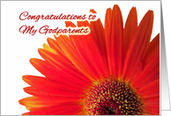 Congratulations to Godparents on Wedding, Gerbera Daisy card