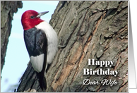 Birthday for Wife, Red-headed Woodpecker in Tree card