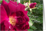 Get Well for Mom, Red Roses card