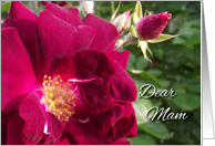 Get Well for Mam, Red Roses card