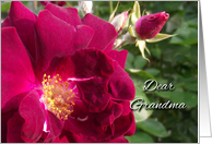 Get Well for Grandma, Red Roses card