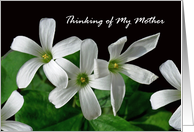 Get Well for Mother, White Shamrock Flowers card