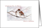 Happy Holidays, Illustrated Sparrow Christmas Card