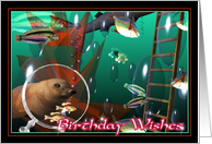 Sea lion celebrates your birthday card