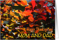 Happy Thanksgiving Mom and Dad/Colorful Fall Leaves card