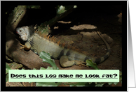 Weight Loss/Encouragement-Iguana Humor card