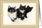Three Kitty Brothers card