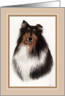 Champion Collie card