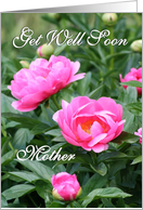 Get Well Soon - Mother / Pink Peonies card