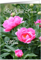 Get Well Soon - Mom / Pink Peonies card
