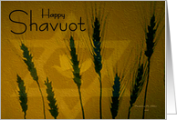 Happy Shavuot / Wheat with Star of David & dove card