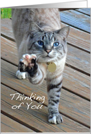 Bengal Cat - Thinking of You card