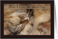 Father's Day Card Relax With Sleeping Maine Coon Cat card