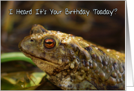 Birthday Card With Wild Toad Play On Words, Toaday (today) card