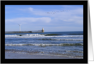 Birds flying along the jetty at Blyth Beach Northumberland UK card